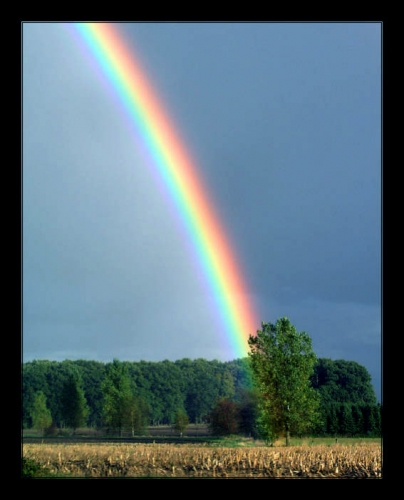 rainbow9zx.jpg